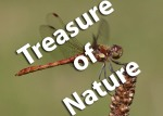 Treasure of Nature Photography Competition