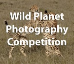 Wild Planet Photography Competition